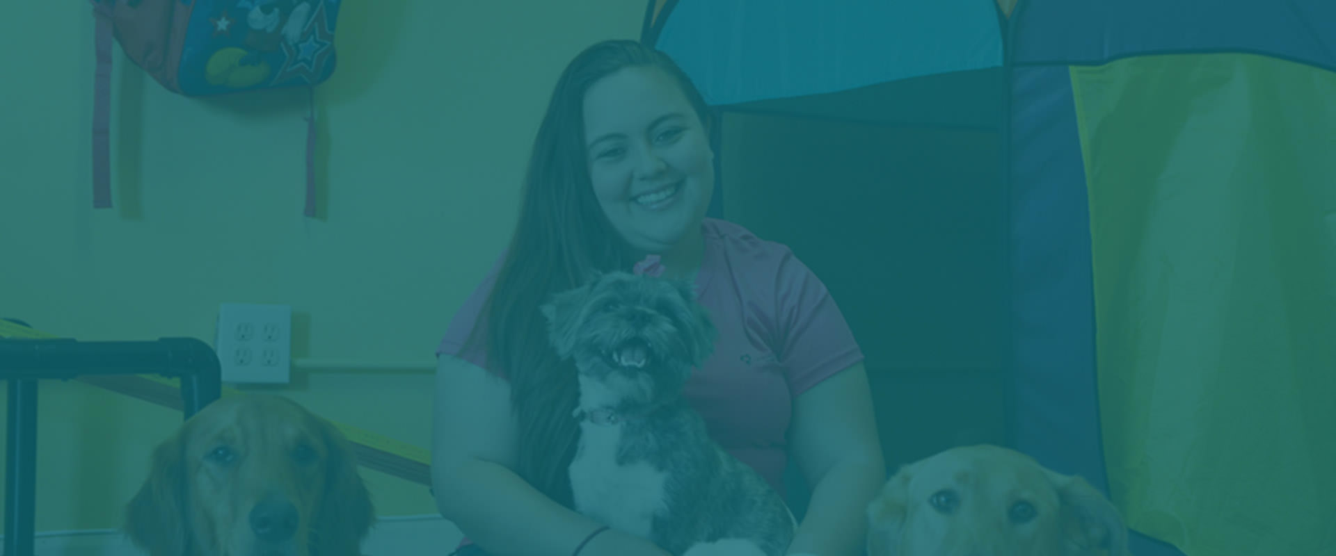 Dog Trainer Certification Florida Dog Groomer Academy Dog