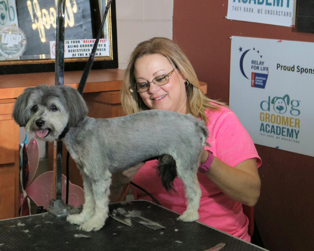 Florida Dog Groomer Certification