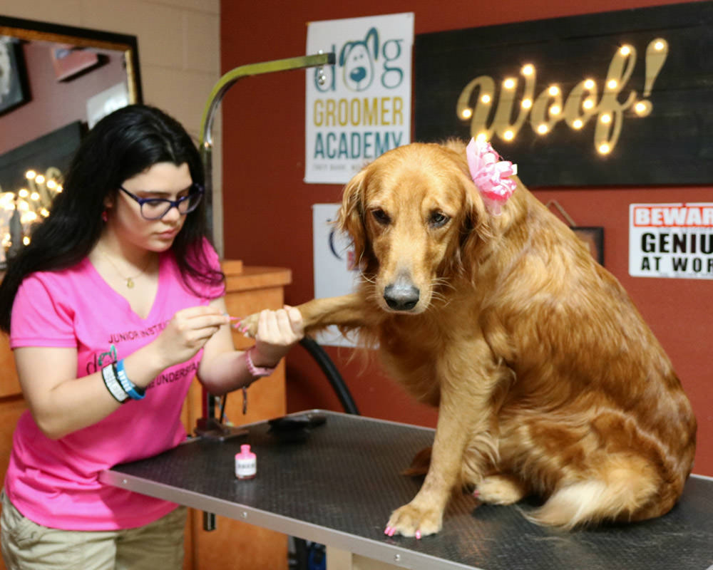 Florida Dog Groomer School Dog Groomer Academy